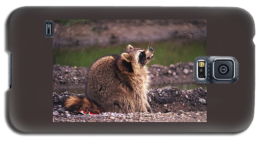 Raccoon Galaxy S5 Case featuring the photograph 070406-67 by Mike Davis