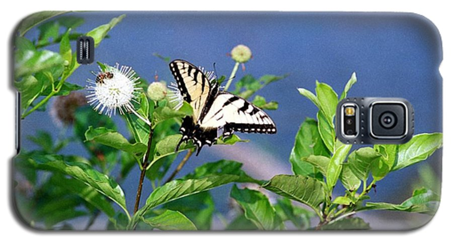 Butterfly Galaxy S5 Case featuring the photograph 080706-7 by Mike Davis