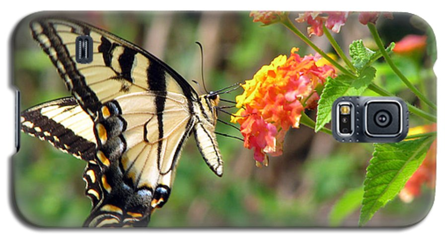 Butterfly Galaxy S5 Case featuring the photograph Butterfly by Amanda Barcon