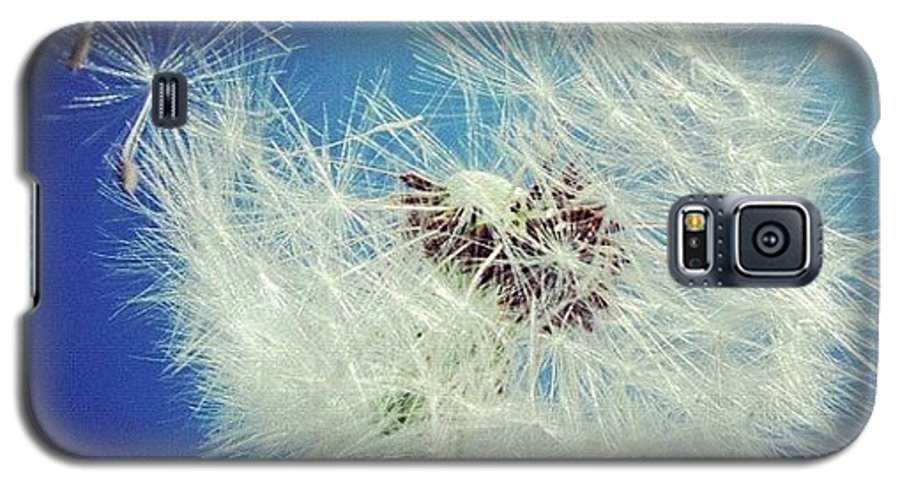 Dandelion Galaxy S5 Case featuring the photograph Dandelion And Blue Sky by Matthias Hauser