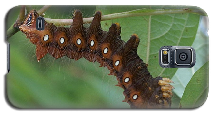 Moth Galaxy S5 Case featuring the painting Hanging In There by Debbie May