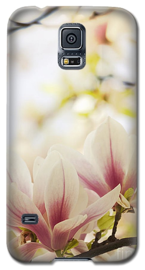 Magnolia Galaxy S5 Case featuring the photograph Magnolia by Jelena Jovanovic