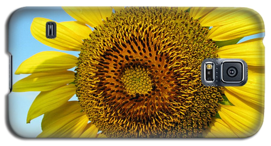 Sunflower Galaxy S5 Case featuring the photograph Sunflower Series by Amanda Barcon