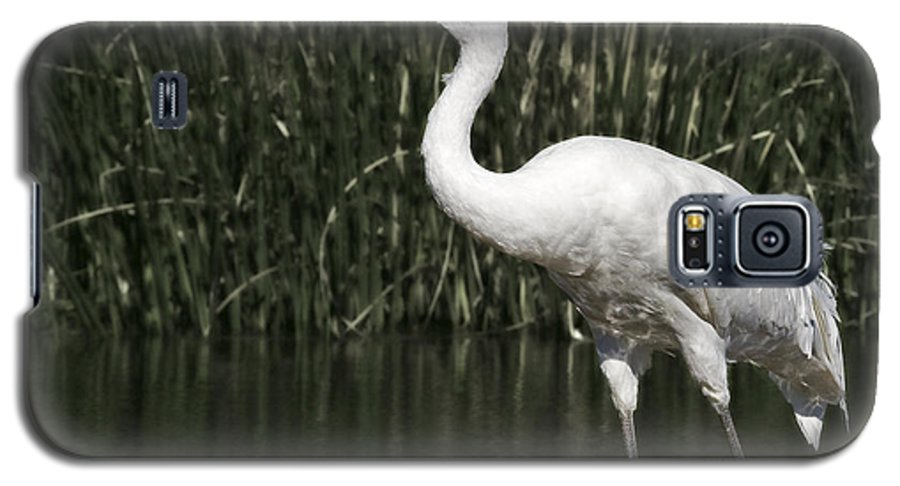 Whooping Galaxy S5 Case featuring the photograph Whooping Crane by Al Mueller
