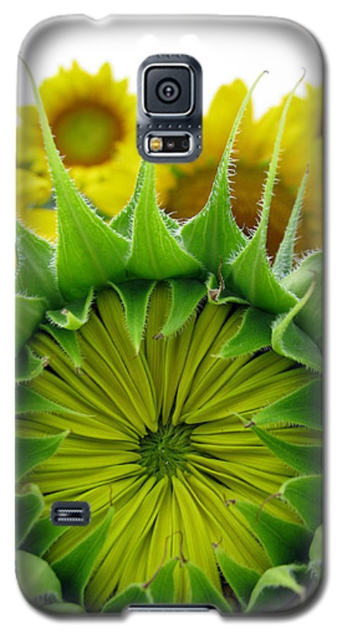 Sunflwoers Galaxy S5 Case featuring the photograph Sunflower Series by Amanda Barcon