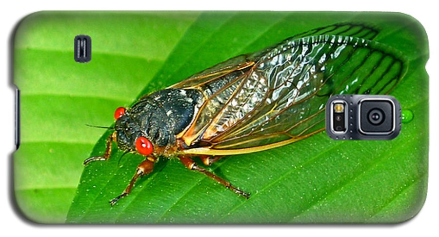 17 Galaxy S5 Case featuring the photograph 17 Year Periodical Cicada by Douglas Barnett