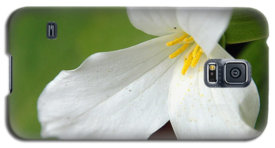 Flora Galaxy S5 Case featuring the photograph Untitled by Kathy Schumann