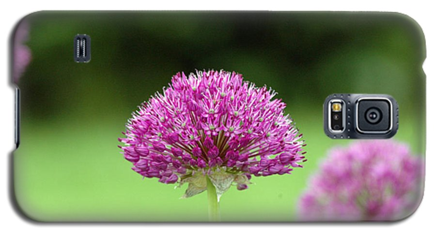 Purple Galaxy S5 Case featuring the photograph Untitled by Kathy Schumann