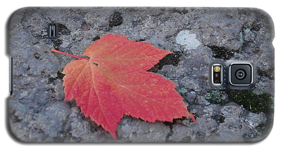 Leaf Galaxy S5 Case featuring the photograph Untitled by Kathy Schumann