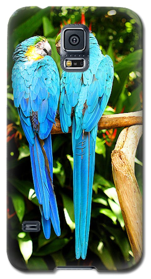 Bird Galaxy S5 Case featuring the photograph A Pair Of Parrots by Marilyn Hunt