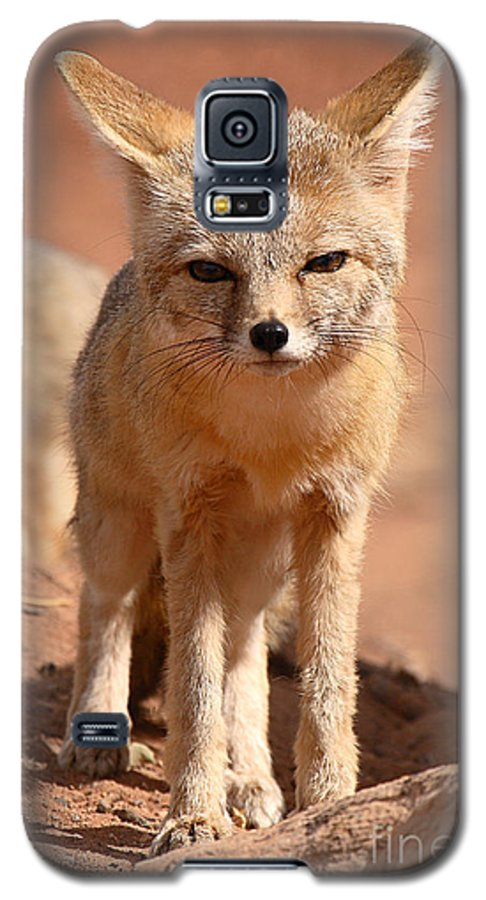 Fox Galaxy S5 Case featuring the photograph Adult Kit Fox Ears And All by Max Allen