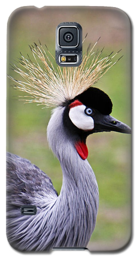 Bird Galaxy S5 Case featuring the photograph African Crowned Crane by Douglas Barnett