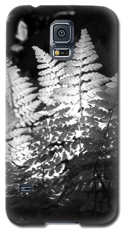 Fern Galaxy S5 Case featuring the photograph After Glow by Randy Oberg