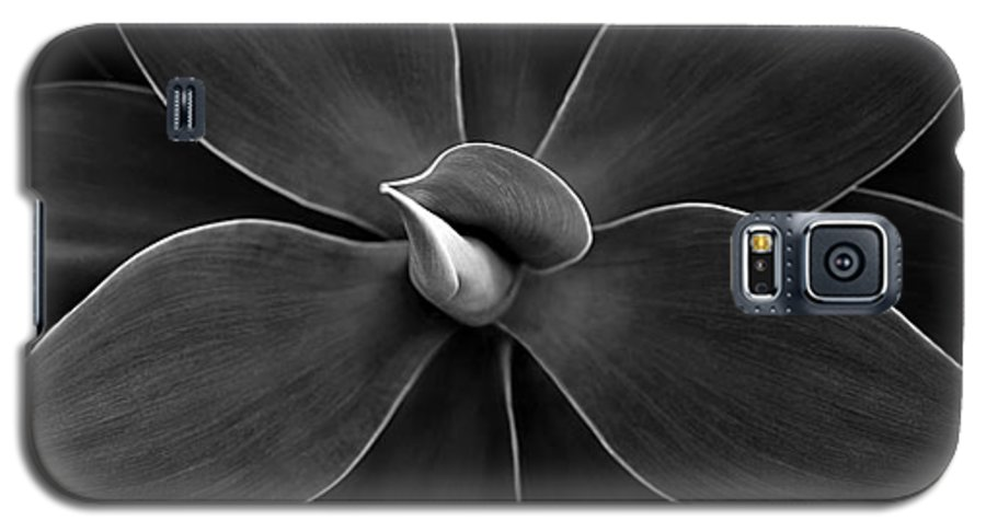 Agave Galaxy S5 Case featuring the photograph Agave Leaves Detail by Marilyn Hunt
