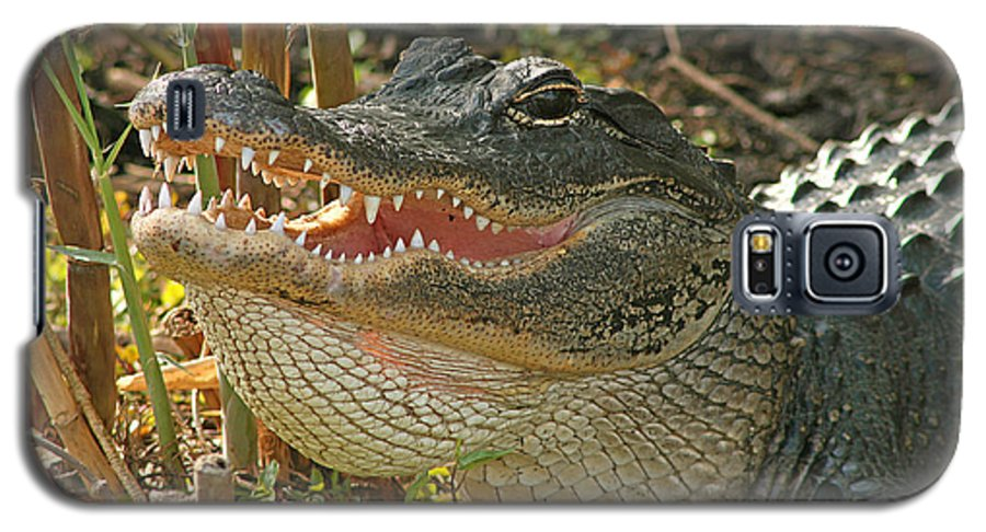 Alligator Galaxy S5 Case featuring the photograph Alligator Showing Its Teeth by Max Allen