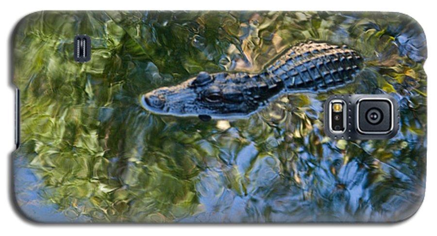 Alligator Galaxy S5 Case featuring the photograph Alligator Stalking by Douglas Barnett