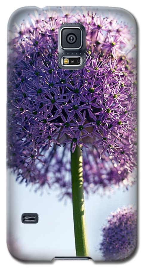 Allium Galaxy S5 Case featuring the photograph Allium Flower by Tony Cordoza