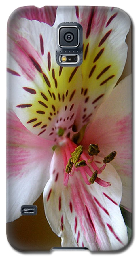 Nature Galaxy S5 Case featuring the photograph Alstroemerias - Close by Lucyna A M Green
