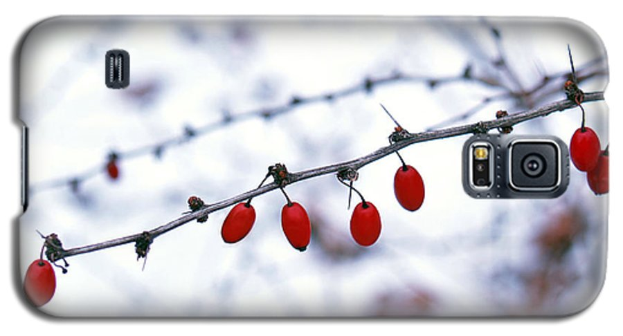 Barberry Galaxy S5 Case featuring the photograph American Barberry In Snow by Anna Lisa Yoder