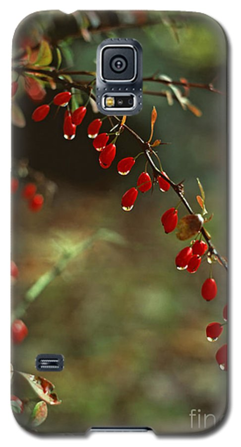 Pennsylvania Galaxy S5 Case featuring the photograph American Barberry With Raindrops by Anna Lisa Yoder