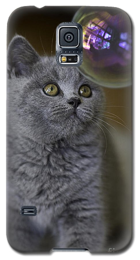 Cat Galaxy S5 Case featuring the photograph Archie With Bubble by Sheila Smart Fine Art Photography