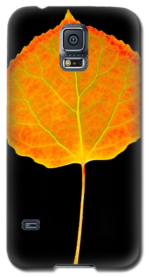 Leaf Galaxy S5 Case featuring the photograph Aspen Leaf by Marilyn Hunt