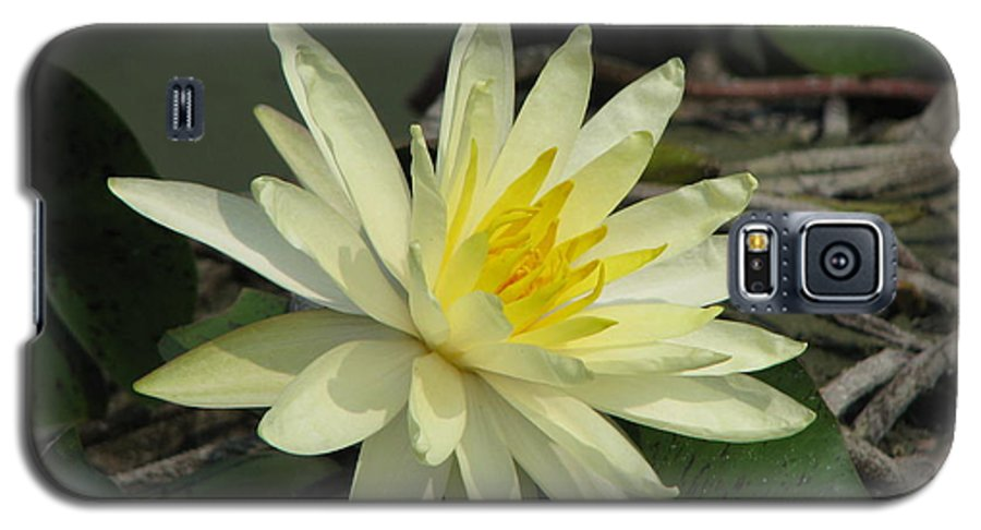 Lilly Galaxy S5 Case featuring the photograph At The Pond by Amanda Barcon