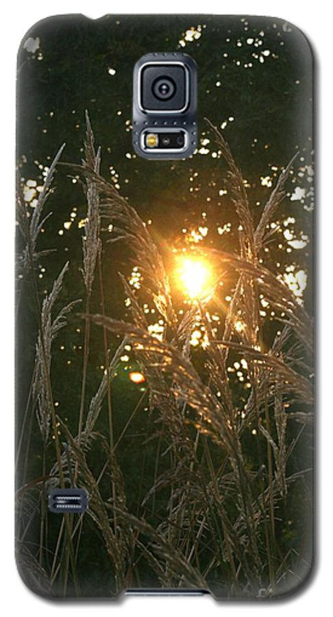 Light Galaxy S5 Case featuring the photograph Autumn Grasses In The Morning by Nadine Rippelmeyer