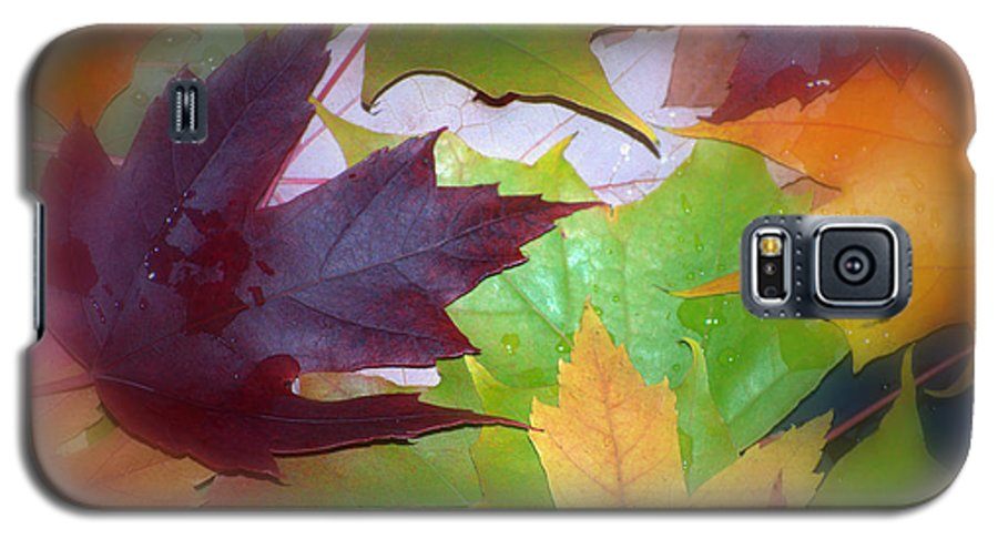 Trees Galaxy S5 Case featuring the photograph Autumn by Larry Keahey