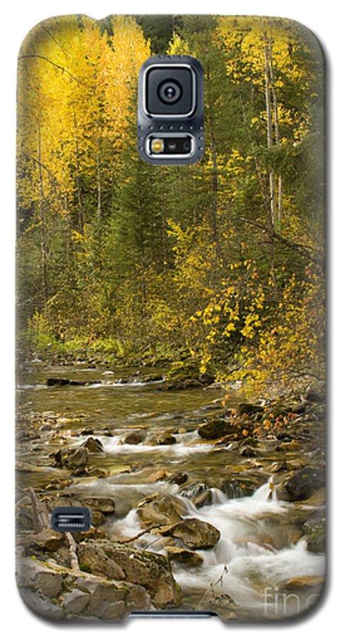 Idaho Galaxy S5 Case featuring the photograph Autumn Stream by Idaho Scenic Images Linda Lantzy