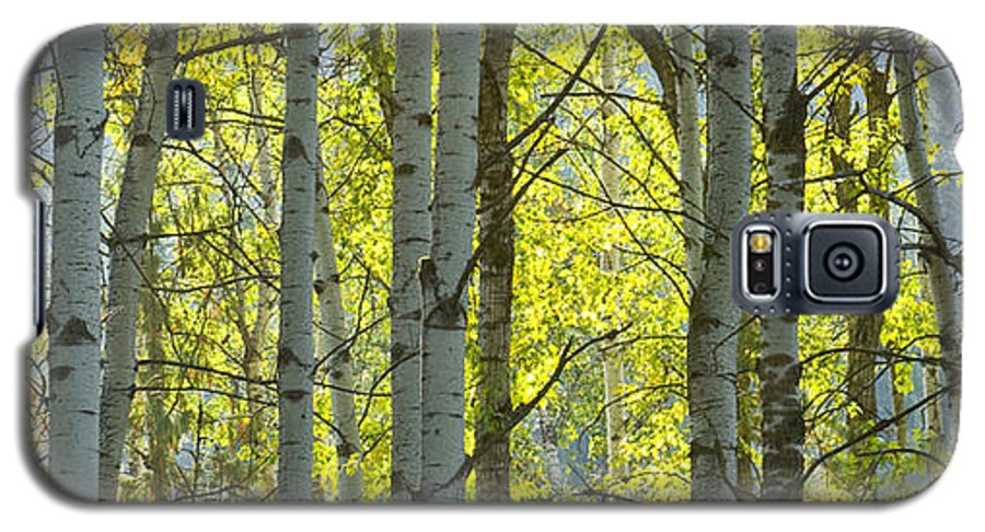 Trees Galaxy S5 Case featuring the photograph Autumn Through The Trees by Idaho Scenic Images Linda Lantzy