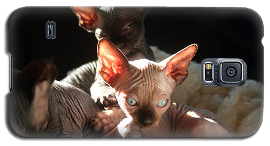 Photo Galaxy S5 Case featuring the photograph Baby Sphynx Cats by Ruben Flanagan