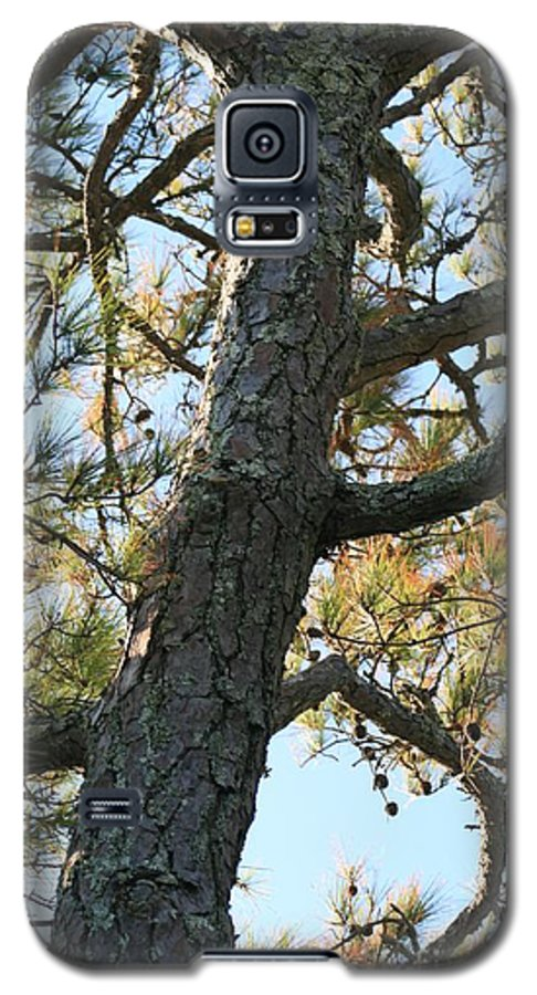 Tree Galaxy S5 Case featuring the photograph Bald Head Tree by Nadine Rippelmeyer