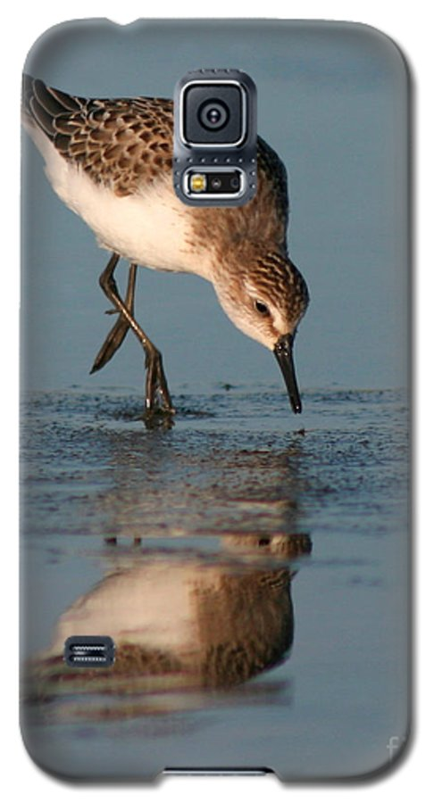 Sanderling Galaxy S5 Case featuring the photograph Ballet Feeding Of A Sanderling by Max Allen