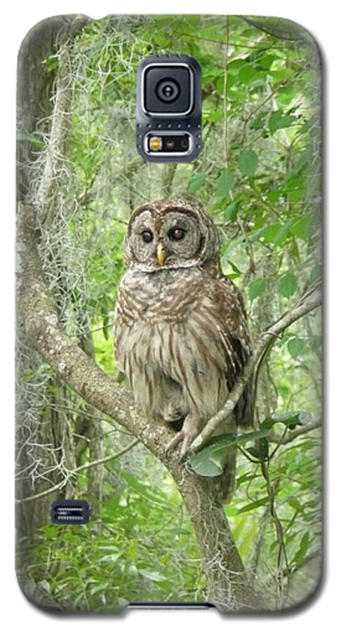 Nature Galaxy S5 Case featuring the photograph Barred Owl I by Kathy Schumann