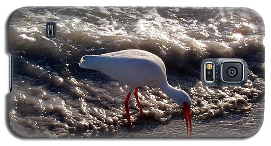 Beach Galaxy S5 Case featuring the photograph Beach Bird by Elizabeth Klecker