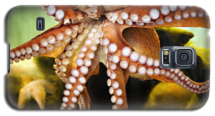 Octopus Galaxy S5 Case featuring the photograph Beautiful Octopus by Marilyn Hunt