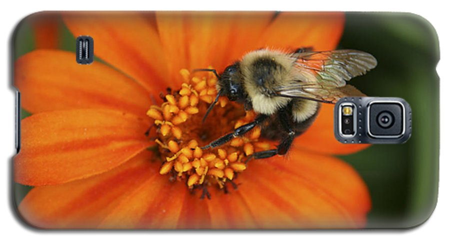 Bee Galaxy S5 Case featuring the photograph Bee On Aster by Margie Wildblood