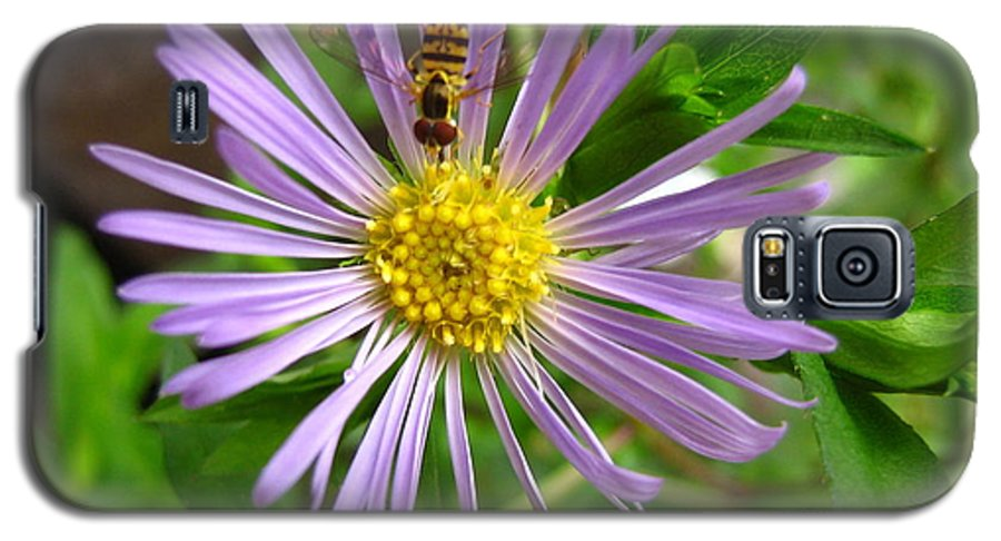 Bee Galaxy S5 Case featuring the photograph Bee On Wildflower by Melissa Parks