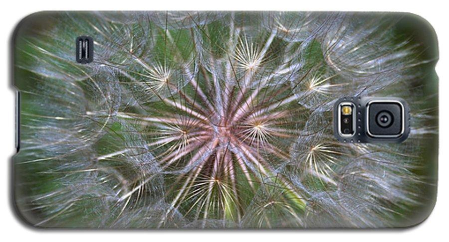 Dandelion Galaxy S5 Case featuring the photograph Big Wish by Linda Sannuti