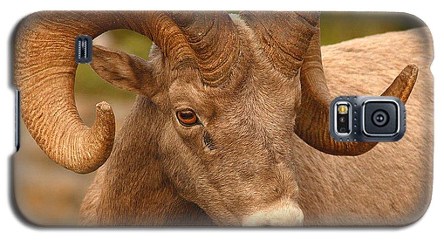 Bighorn Galaxy S5 Case featuring the photograph Bighorn Ram With Evident Disdain by Max Allen