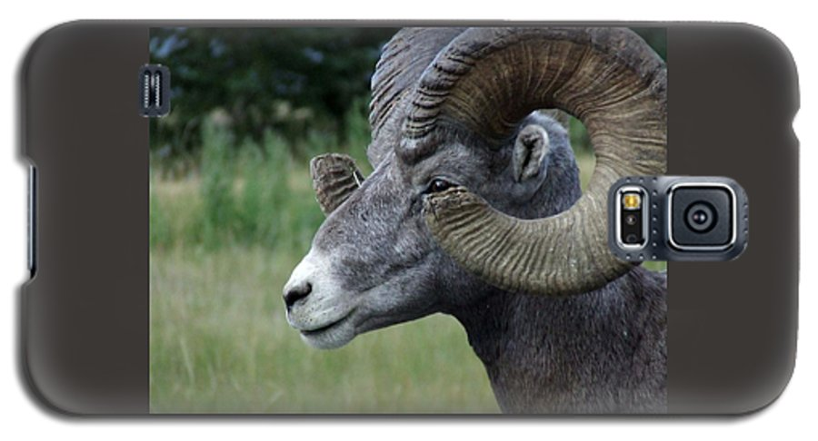 Big Horned Ram Galaxy S5 Case featuring the photograph Bighorned Ram by Tiffany Vest