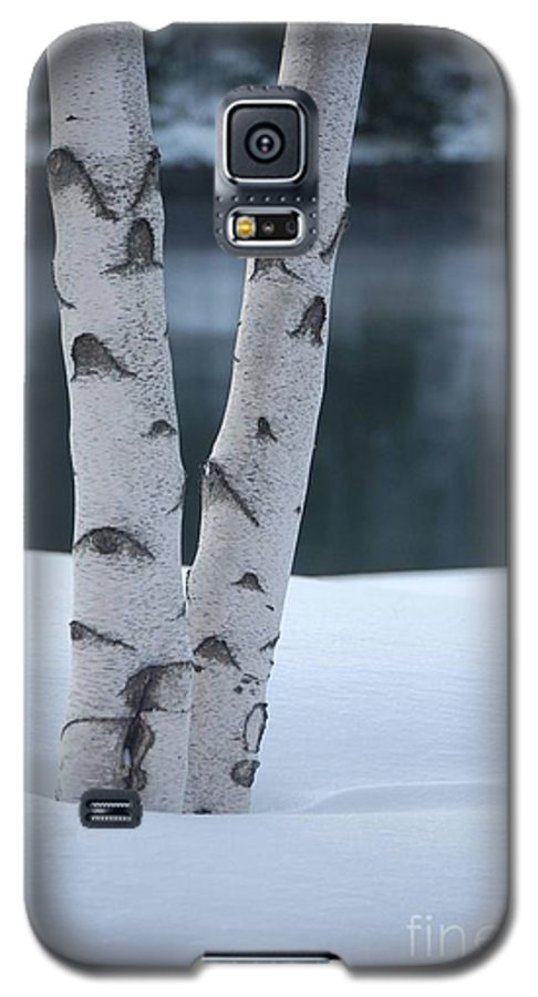 Birch Galaxy S5 Case featuring the photograph Birch Twins In Snow by Faith Harron Boudreau