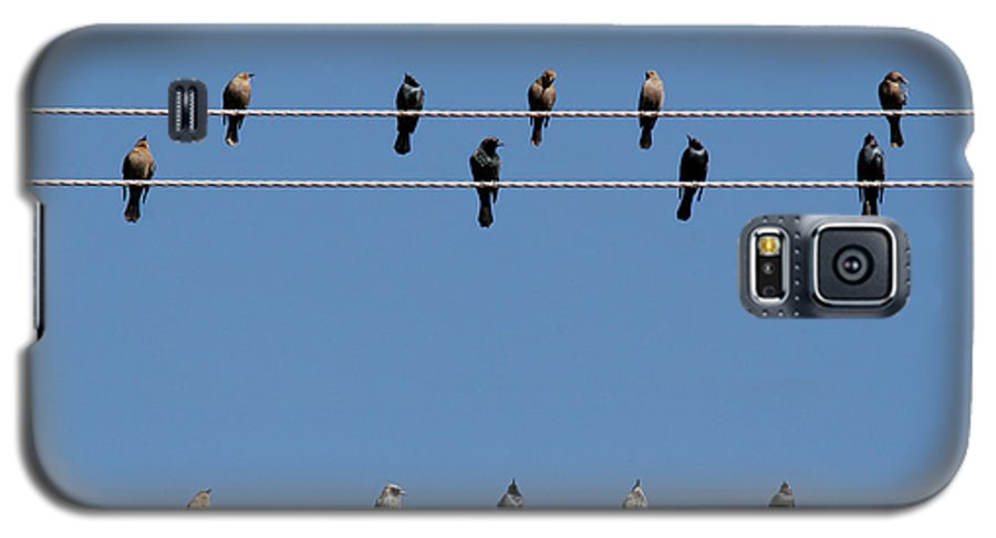 Birds Galaxy S5 Case featuring the photograph Bird On A Wire by Christine Till