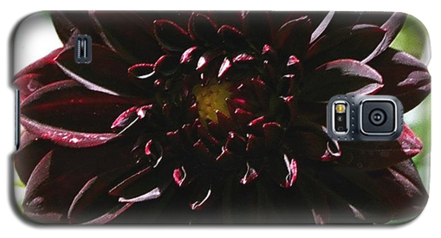 Flower Galaxy S5 Case featuring the photograph Black Dalia by Dean Triolo