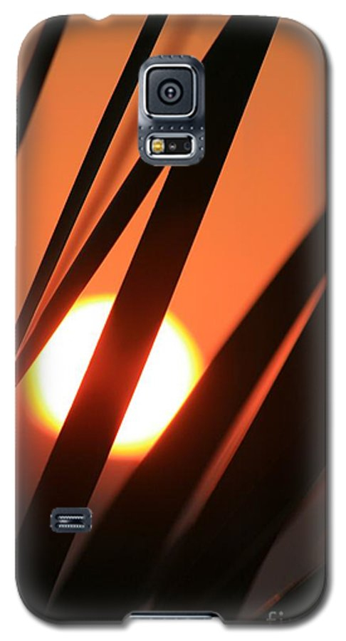 Sun Galaxy S5 Case featuring the photograph Blazing Sunset And Grasses by Nadine Rippelmeyer