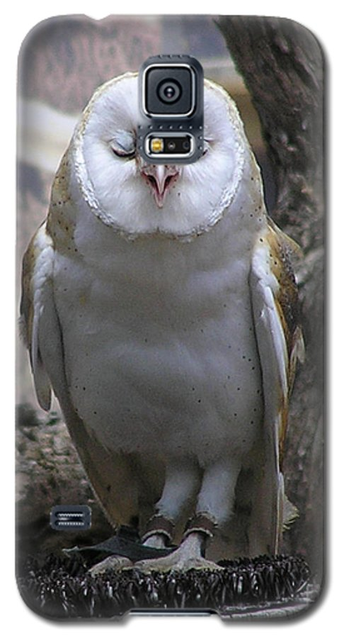 Barn Galaxy S5 Case featuring the photograph Blinking Owl by Louise Magno