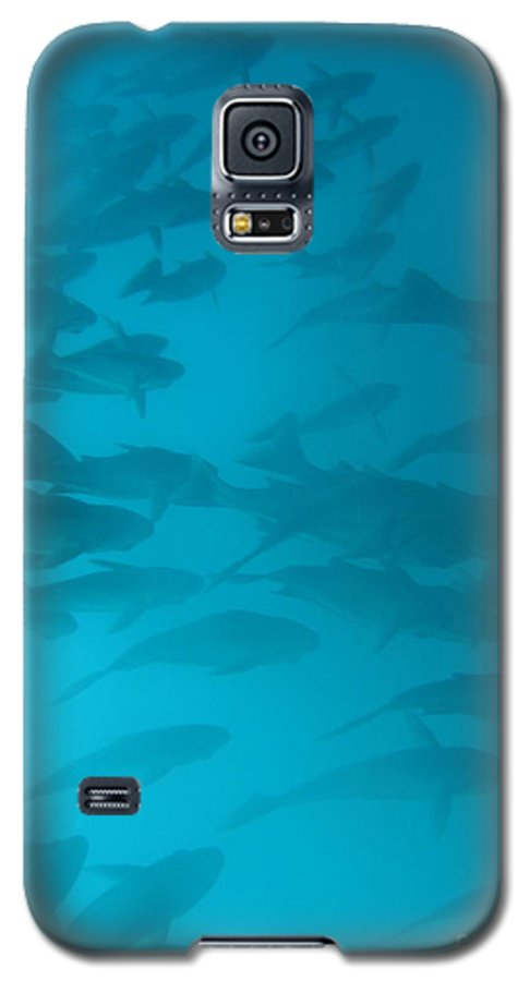 Underwater Galaxy S5 Case featuring the photograph Blue Flash by Chad Natti