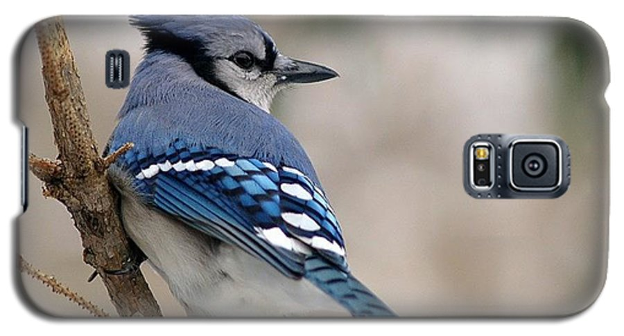 Blue Jay Galaxy S5 Case featuring the photograph Blue Jay by Gaby Swanson