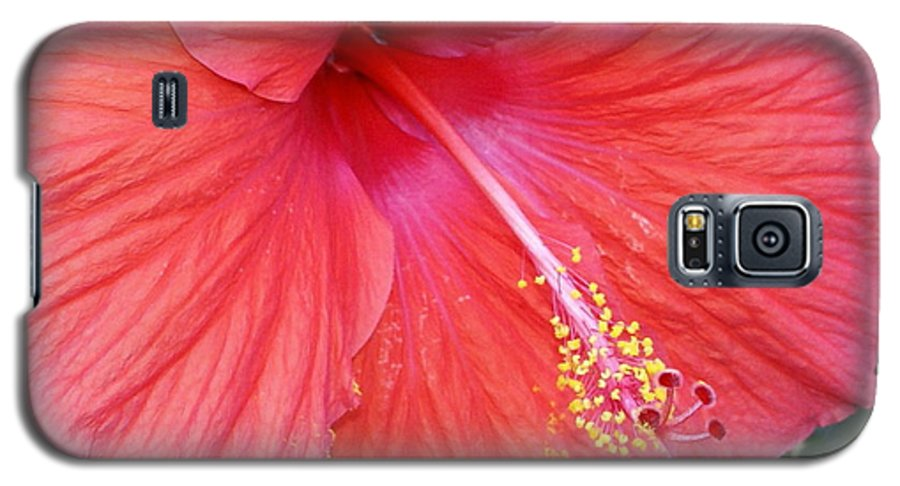 Flowers Galaxy S5 Case featuring the photograph Blushing Stamen by Debbie May
